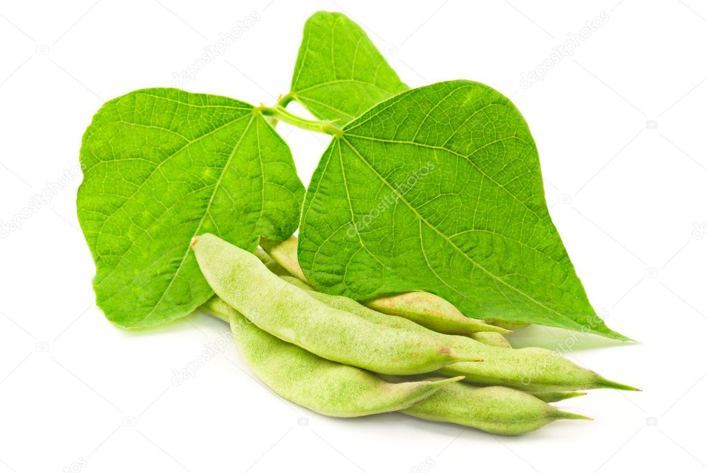 Kidney beans with leaves on white  Stock Photo #3896538