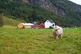Ewe on a pasture — Stock Photo