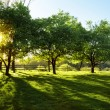 Stock Photo: Sun Shining through Trees
