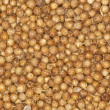 Coriander seeds spice background -  