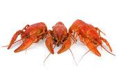 Trzy crawfishes gotowany — Zdjęcie stockowe