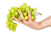 Hand holding green grapes. Isolated on the white background — Stockfoto
