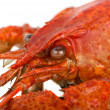 Crayfish head closeup — Stock Photo #3318995