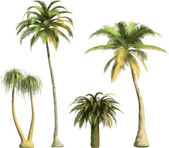 Color Palms - vector — Stock Vector