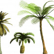Royalty-Free Stock Vector Image: Color Palms - vector