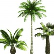 Color Palms - vector - Stock Vector