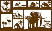 African animals collection (vector) — Vector de stock