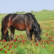 Beautiful brown horse on pasture — Stock Photo #3632535