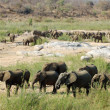 Herd of African Elephants — Stock Photo #3223849