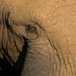 Elephant eye — Stock Photo
