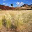 Grassland landscape - Stock Photo