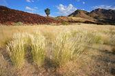 Grassland landscape — Stock Photo