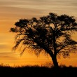 African sunset with silhouetted tree - Stock Photo