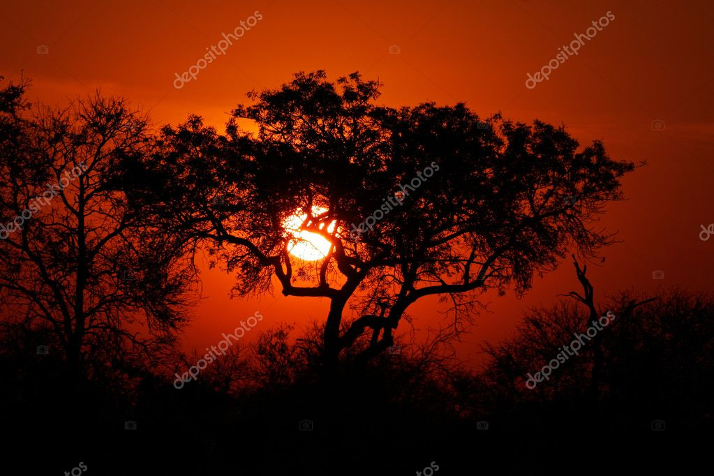Sunset with silhouetted African savanna trees, Kruger National park, South Africa — Photo #3111301