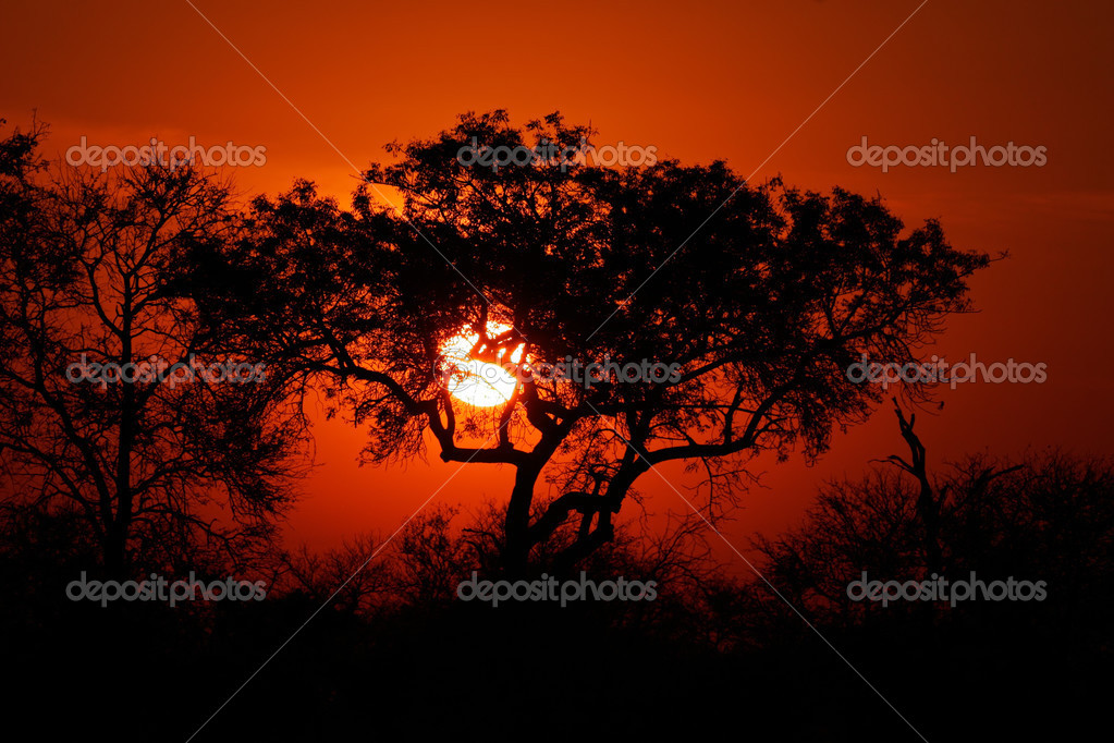 Sunset with silhouetted African savanna trees, Kruger National park, South Africa — Stock Photo #3111301