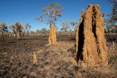 Cathedral termite mounds, Australia — Stock Photo