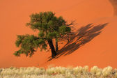 Dune, tree and grass — Stock Photo