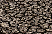 Parched land — Stock Photo