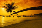 Sunset with palm and boats on tropical beach — Stock Photo