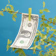 Dollar Money Tree - Stock Photo