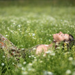Stock Photo: Relax on meadow