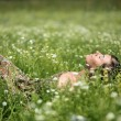 Relax on meadow — Stock Photo