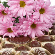 Set of chocolate and chrysanthemum — Stock Photo