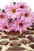 Set of chocolate and chrysanthemum — Fotografia Stock