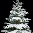 Foto Stock: Fir tree covered with snow at night