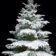 Fir tree covered with snow at night — Stock Photo