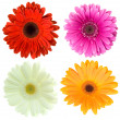 Set of gerbera flowers - Stock Photo