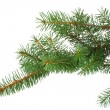 Royalty-Free Stock Photo: Branch of fir-tree isolated