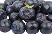 Ripe bilberries — Stock Photo