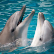 Pair of dolphins in water — Stock Photo