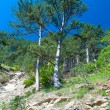 Two pine-trees on mountainside - Stock Photo