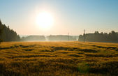 Sunrise on field with fog — Stock Photo