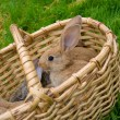 Stock Photo: Bunnies in basket