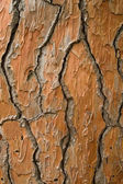 Bark texture — 图库照片