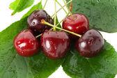 Sweet cherries on leaves — Stock Photo