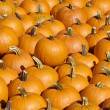 Bright orange pumpkin collection — Stock Photo