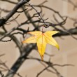 Stock Photo: Last leaf