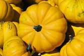 Set of pumpkins — Stock Photo
