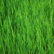 Green grass — Stock Photo #2979876