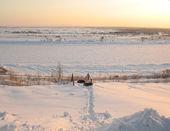 Twee honden op de oever van de rivier van de winter — Stockfoto