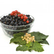 Still life of colored currants. — Stock Photo