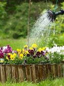 Watering Flowers — Stockfoto