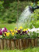 Watering Flowers — Stock Photo