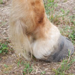 Hoof of a horse — Stock Photo