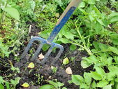 Mistgabel steckte im Gras von einem Hinterhof — Stockfoto