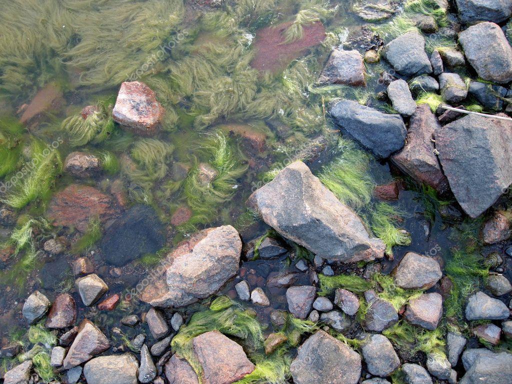 steine mit algen an der k ste zusammensetzung der natur stockfoto laksen 3644408. Black Bedroom Furniture Sets. Home Design Ideas